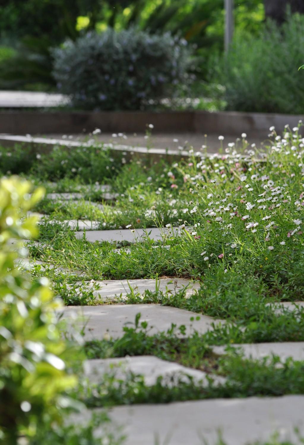Entretien parcs et jardins adonis paysages for Entretien jardin 74