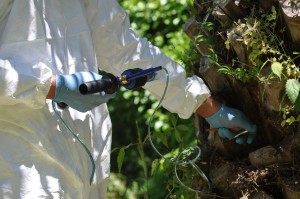 traitement préventif micro injection treecare syngenta